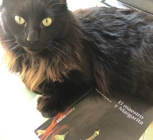 Gato negro de eva Losada